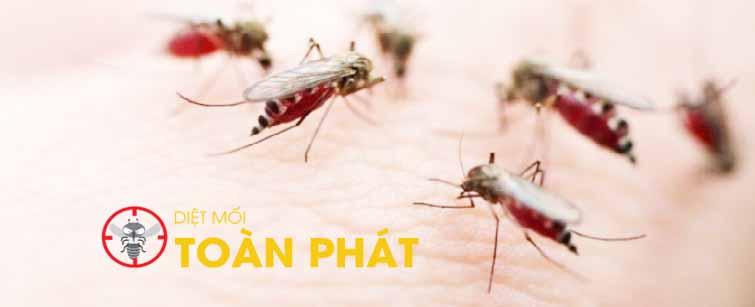 Công ty phun diệt muỗi tại quận 1