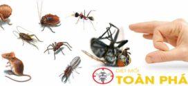 Cửa hàng bán thuốc diệt côn trùng chính hãng tại TPHCM